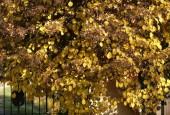 http://gardenpanorama.cz/wp-content/uploads/img_9202-170x115.jpg