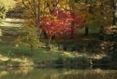 http://gardenpanorama.cz/wp-content/uploads/img_9205-170x115.jpg