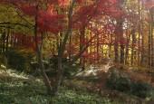 http://gardenpanorama.cz/wp-content/uploads/img_9214-170x115.jpg