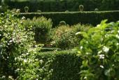 http://gardenpanorama.cz/wp-content/uploads/isolla_bella_DSCF0001_001-170x115.jpg