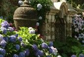 http://gardenpanorama.cz/wp-content/uploads/isolla_bella_DSCF0002_002-170x115.jpg