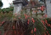 http://gardenpanorama.cz/wp-content/uploads/isolla_bella_DSCF0013_006-170x115.jpg