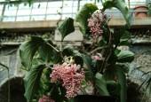 http://gardenpanorama.cz/wp-content/uploads/isolla_bella_DSCF0052_013-170x115.jpg