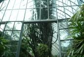 http://gardenpanorama.cz/wp-content/uploads/isolla_bella_DSCF0055_014-170x115.jpg