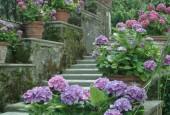 http://gardenpanorama.cz/wp-content/uploads/isolla_bella_DSCF0058_015-170x115.jpg