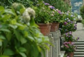 http://gardenpanorama.cz/wp-content/uploads/isolla_bella_DSCF0059_016-170x115.jpg