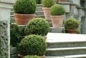 http://gardenpanorama.cz/wp-content/uploads/isolla_bella_DSCF0070_017-170x115.jpg