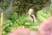 http://gardenpanorama.cz/wp-content/uploads/isolla_bella_DSCF0113_026-170x115.jpg
