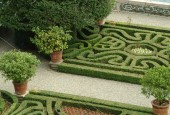 http://gardenpanorama.cz/wp-content/uploads/isolla_bella_DSCF0125_032-170x115.jpg