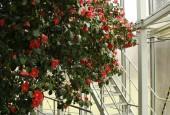 http://gardenpanorama.cz/wp-content/uploads/kamelie_pilnitz__mg_0593_03-170x115.jpg