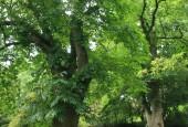 http://gardenpanorama.cz/wp-content/uploads/kilerton_img_3420_012-170x115.jpg