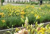 http://gardenpanorama.cz/wp-content/uploads/kratochvile_P8250617_004-170x115.jpg