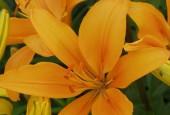 http://gardenpanorama.cz/wp-content/uploads/kratochvile_P8250622_008-170x115.jpg