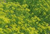 http://gardenpanorama.cz/wp-content/uploads/kratochvile_P8250625_011-170x115.jpg