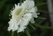 http://gardenpanorama.cz/wp-content/uploads/kratochvile_P8250626_012-170x115.jpg
