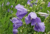 http://gardenpanorama.cz/wp-content/uploads/kratochvile_P8250630_016-170x115.jpg