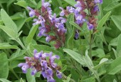 http://gardenpanorama.cz/wp-content/uploads/kratochvile_P8250636_022-170x115.jpg