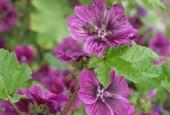 http://gardenpanorama.cz/wp-content/uploads/kratochvile_P8250637_023-170x115.jpg