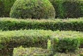 http://gardenpanorama.cz/wp-content/uploads/kratochvile_P8250644_030-170x115.jpg