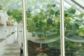 http://gardenpanorama.cz/wp-content/uploads/lost_gard_heliganimg_2962-170x115.jpg