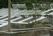 http://gardenpanorama.cz/wp-content/uploads/lost_gard_heliganimg_2963-170x115.jpg