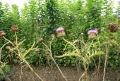 http://gardenpanorama.cz/wp-content/uploads/lost_gard_heliganimg_2985-170x115.jpg