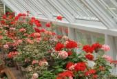 http://gardenpanorama.cz/wp-content/uploads/lost_gard_heliganimg_3004-170x115.jpg
