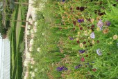 http://gardenpanorama.cz/wp-content/uploads/lost_gard_heliganimg_3034-170x115.jpg