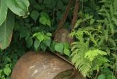 http://gardenpanorama.cz/wp-content/uploads/lost_gard_heliganimg_3067-170x115.jpg