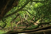 http://gardenpanorama.cz/wp-content/uploads/lost_gard_heliganimg_3073-170x115.jpg