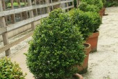 http://gardenpanorama.cz/wp-content/uploads/lost_gard_heliganimg_3078-170x115.jpg