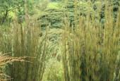 http://gardenpanorama.cz/wp-content/uploads/lost_gard_heliganimg_3090-170x115.jpg