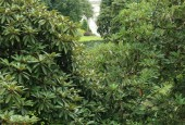 http://gardenpanorama.cz/wp-content/uploads/lost_gard_heliganimg_3105-170x115.jpg