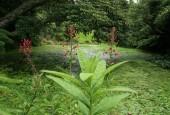 http://gardenpanorama.cz/wp-content/uploads/lost_gard_heliganimg_3112-170x115.jpg