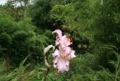 http://gardenpanorama.cz/wp-content/uploads/lost_gard_heliganimg_3120-170x115.jpg
