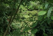 http://gardenpanorama.cz/wp-content/uploads/lost_gard_heliganimg_3139-170x115.jpg