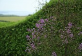 http://gardenpanorama.cz/wp-content/uploads/lost_gard_heliganimg_3219-170x115.jpg