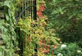 http://gardenpanorama.cz/wp-content/uploads/lost_gard_heliganimg_3230-170x115.jpg