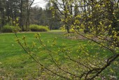 http://gardenpanorama.cz/wp-content/uploads/loucen007-170x115.jpg