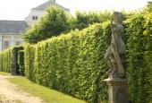 http://gardenpanorama.cz/wp-content/uploads/lysa_IMG_7881_032-170x115.jpg