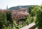 http://gardenpanorama.cz/wp-content/uploads/mala_furstenberg_img_9020_05-170x115.jpg