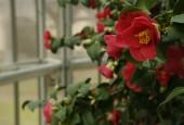 http://gardenpanorama.cz/wp-content/uploads/mg_0581-170x115.jpg