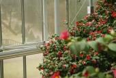 http://gardenpanorama.cz/wp-content/uploads/mg_0584-170x115.jpg