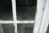 http://gardenpanorama.cz/wp-content/uploads/mosigkau_img_8077_033-170x115.jpg