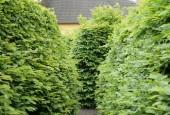 http://gardenpanorama.cz/wp-content/uploads/mosigkau_img_8092_035-170x115.jpg