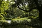 http://gardenpanorama.cz/wp-content/uploads/ninfa002-170x115.jpg