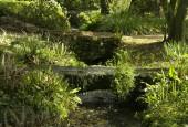 http://gardenpanorama.cz/wp-content/uploads/ninfa003-170x115.jpg