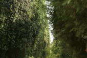 http://gardenpanorama.cz/wp-content/uploads/ninfa006-170x115.jpg