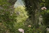 http://gardenpanorama.cz/wp-content/uploads/ninfa009-170x115.jpg
