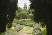http://gardenpanorama.cz/wp-content/uploads/ninfa010-170x115.jpg